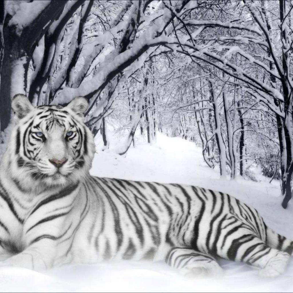 внутренний тигр